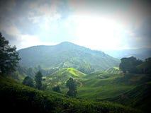Tee-Plantage, Malaysia stockfoto
