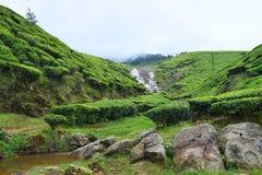 Tee-Plantage mit Felsen und ein kleines Wasser strömt in Munnar, Kerala, Indien Stockbilder