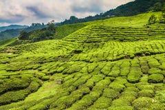 Tee-Plantage mit Weg-Cameron-Hochland, Malaysia Lizenzfreies Stockfoto