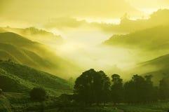 Tee-Plantagen lizenzfreie stockfotografie
