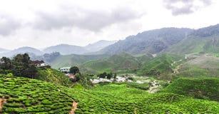 Tee-Plantagen in Malaysia lizenzfreie stockfotografie