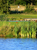 Tee in Pond. The tee area placed on a small island with a green area in the background Royalty Free Stock Image