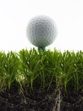 Tee Shot. Golf ball  on tee, in the grass isolated on white Stock Images