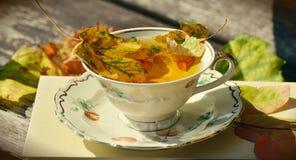 Tee, Teacup, Autumn, Autumn Colours Stock Photo