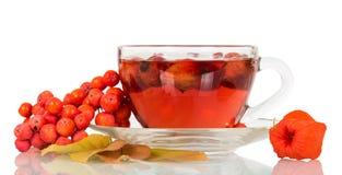 Tee von einem dogrose und von einem Bündel der Eberesche lokalisiert auf Weiß Stockbild