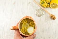 Tee von Lindenbäumen mit frischen Blumen und Zitrone Lizenzfreie Stockbilder