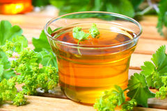 Tee Wiesen-Frauenmantel stockbilder