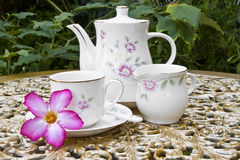 Tee-Zeit im Garten mit Wüsten-Rosen-Blume Stockbild