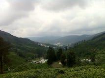 Tee-Zustands-@ Kamerun-Hochländer, Malaysia lizenzfreies stockbild
