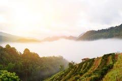 Teebauernhof auf Berg Lizenzfreie Stockfotografie