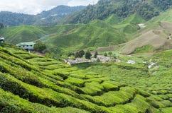 Teebauernhof auf dem moutain Lizenzfreie Stockfotografie