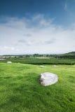 Teebauernhof mit blauem Himmel Lizenzfreies Stockfoto
