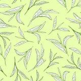 Teebaumblätter auf hellgrünem Hintergrund r Stockfoto