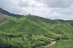 Teebaumfarm stockbild