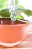 Teebaumschmieröl Lizenzfreie Stockbilder