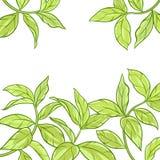 Teeblattvektorrahmen Stockfoto