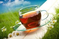 Teecup Lizenzfreie Stockfotos