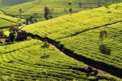 Teefelder im Hügelland, Sri Lanka Lizenzfreie Stockfotos