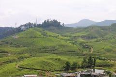 Teefelder in Puncak, Indonesien Lizenzfreies Stockbild