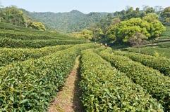 Teegarten lizenzfreie stockfotografie