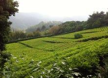 Teegarten in China Lizenzfreie Stockfotografie