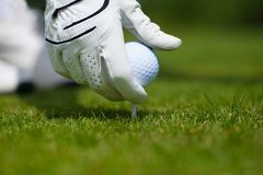 Teeing up a Golf ball. Getting ready to tee up a golf ball for a drive royalty free stock images