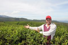 Teelandwirt Stockfotografie