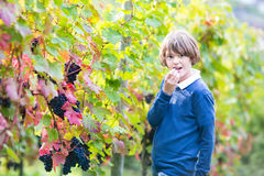 Teen age boy in beautiful autumn vine yard Royalty Free Stock Images