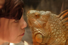 Teen boy admire iguana lizard in zoo Stock Photography