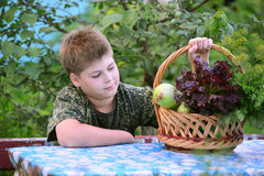 Teen Boy with  basket of fresh vegetables in the garden Royalty Free Stock Image