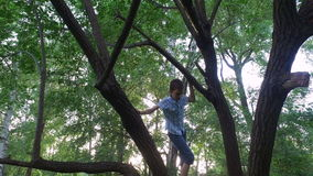 Teen boy climbs on old tree. The boy is really like to climb on a tree. stock video