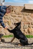 Teen boy doing some basic training with his dog. Teen boy doing some basic training with dog royalty free stock photography