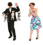 Teen Boy Magic Show with Floating Puppies. Teen boy impressing date by levitating puppies with magic. Clipping path over white background royalty free stock photo