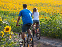 Teen couple riding bike in sunflower field Royalty Free Stock Image