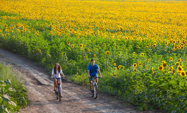 Teen couple riding bike in sunflower field Stock Images
