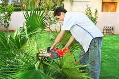 Teen cutting palm. In the garden Stock Photography