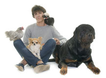 Teen, dogs and chicken Royalty Free Stock Photo