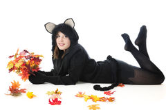 Teen Fall Cat, Black and Beautiful Royalty Free Stock Image