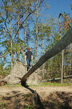 Teen on a Fallen Tree Bridge Stock Photos