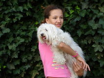 Teen girl with dog. Girl with maltese dog Stock Image