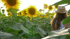 Teen girl enjoy countryside beauty on field with sunflowers in the backlight. Teen girl enjoy the countryside beauty on field with sunflowers in the backlight stock video