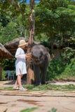 Teen girl feeding elephant calf Stock Images