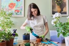 Free Teen Girl Plants Small Cactus In Pot. Hobbies And Leisure, Home Gardening, Houseplant Royalty Free Stock Photos - 184251298