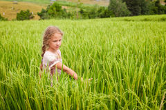 Teen girl on the rice paddies. At the day time Royalty Free Stock Photo
