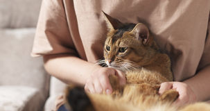 Teen girl with sad abyssinian cat on knees sitting on couch Stock Images