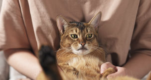 Teen girl with sad abyssinian cat on knees sitting on couch Royalty Free Stock Photography