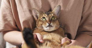 Teen girl with sad abyssinian cat on knees sitting on couch Stock Photo