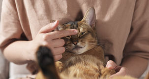 Teen girl with sad abyssinian cat on knees sitting on couch. Wide photo Stock Images