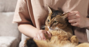 Teen girl with sad abyssinian cat on knees sitting on couch. Wide photo Royalty Free Stock Photography
