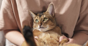 Teen girl with sad abyssinian cat on knees sitting on couch. Wide photo Stock Image